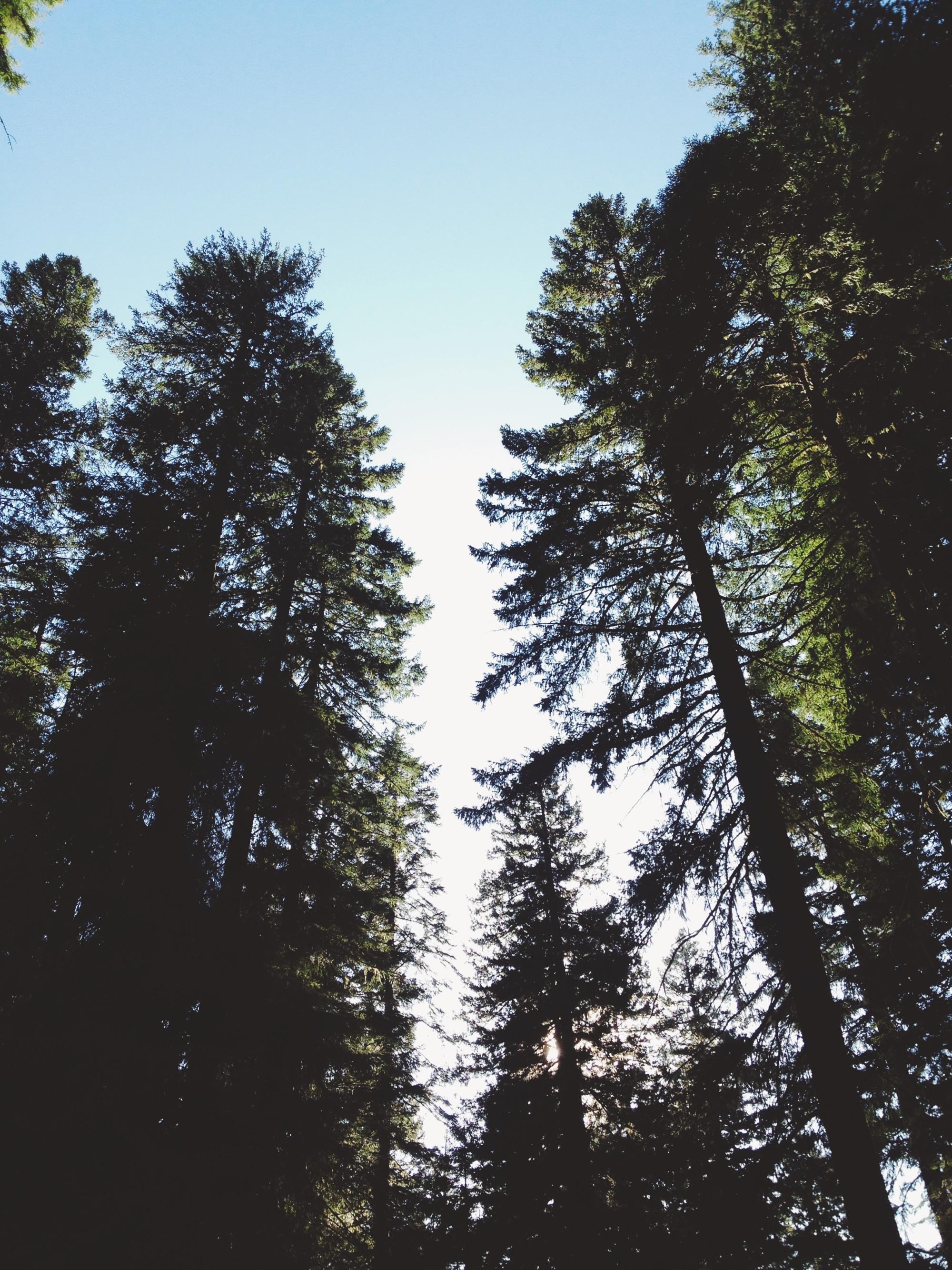TRIP-Oregon-35