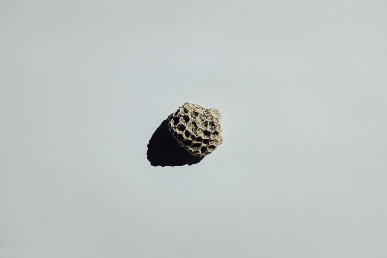 2019-Shells-12