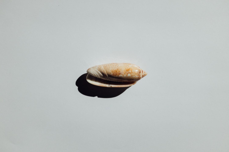 2019-Shells-16