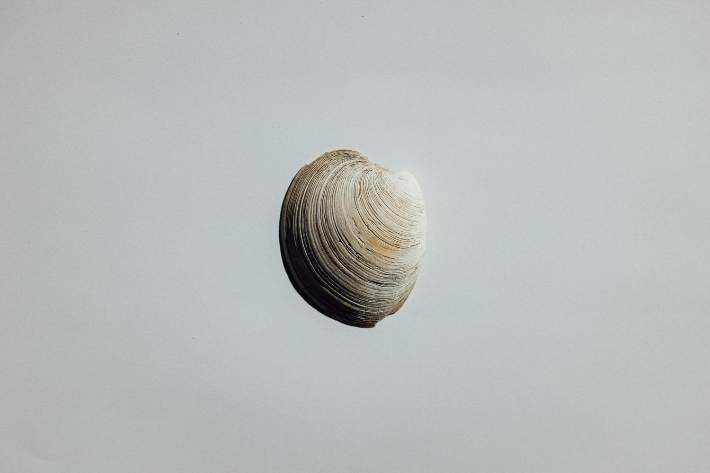 2019-Shells-17