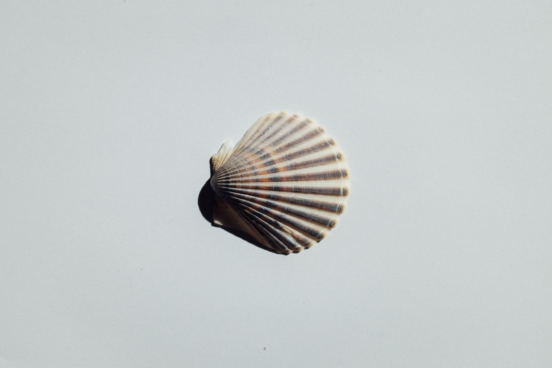 2019-Shells-4