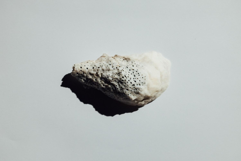 2019-Shells-6